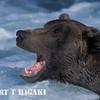grizzlies-5