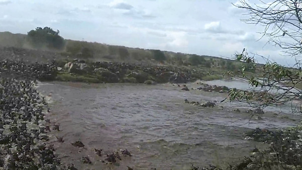 In the middle of the single largest Wildebeest crossing on the Mara River estimated at over 500,000! We were not just watching, we were in it!! Amazing!!