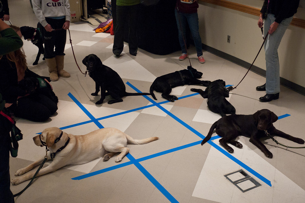 Yes - Tic Tac Toe with puppies! The row of black puppies wins this round! I think that's Joe in the right front corner.