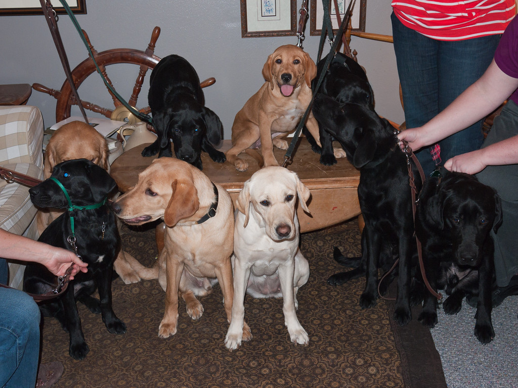 This is as close as we got to a group photo - all nine pups held this position for about a millisecond...