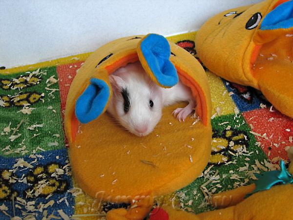 Bunny slipper for sleep and shelter.