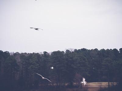 Shelley Lake Park   Raleigh, North Carolina