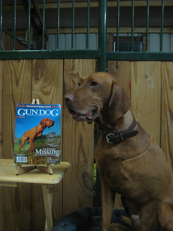 Bart with Gun Dog Magazine
