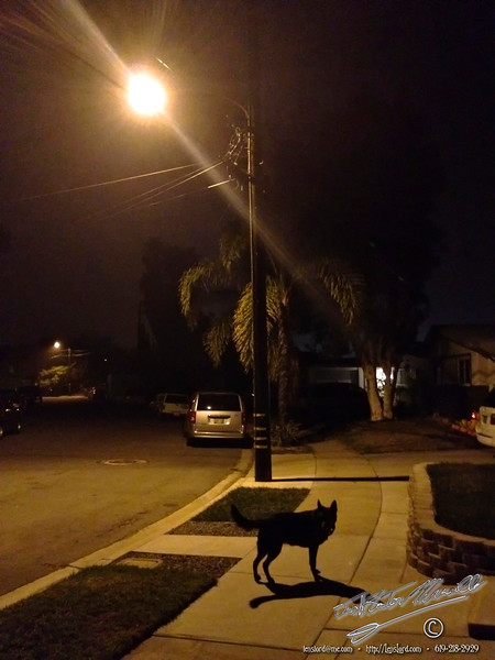 Gypsy Under a Streetlight - IMG_5246