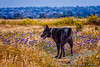 by Jack Foster Mancilla - LensLord™<br /> _MG_3644