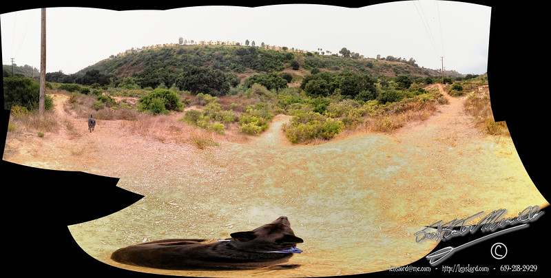While shooting a little Panorama, Gypsy decided she wished to be in two places in the final image.