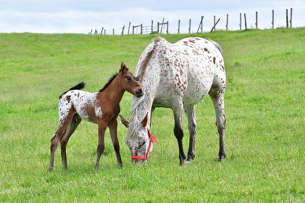 HORSES 06/09/2019