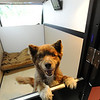 """Hagrid the dog has the television on in his little condo at Happy Hounds.<br /> For more photos of Happy Hounds, go to  <a href=""""http://www.dailycamera.com"""">http://www.dailycamera.com</a>.<br /> Cliff Grassmick / July 22, 2011"""