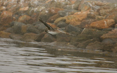 Harbor Breeze 09152013