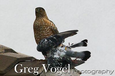 Vogel_IMGT5675