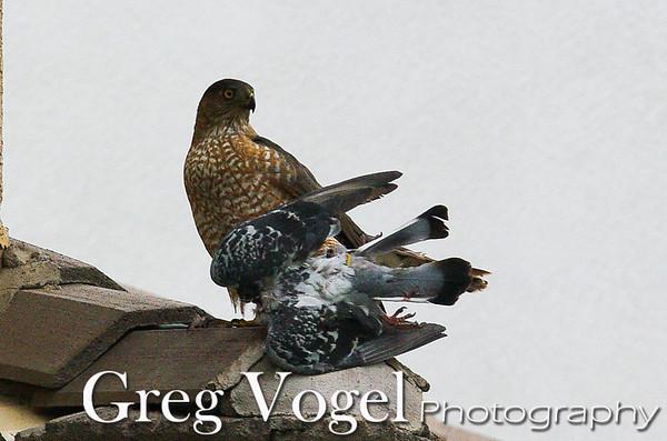 Vogel_IMGT5676