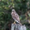 Hawks January 2018-8962