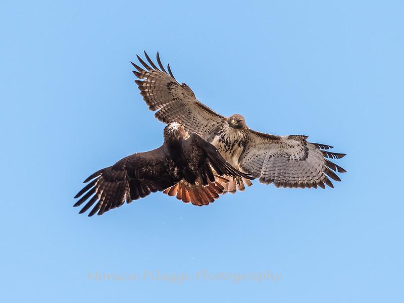 Hawks January 2018-8872