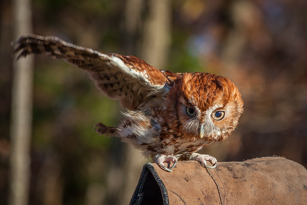 Hawks, Owls + Eagles