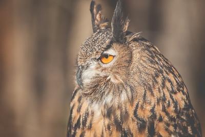 Birds of Prey Shoot \\ 2013 NatureVisions Photo Expo \\ Manassas, Virginia