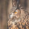 Birds of Prey Shoot \\ 2013 NatureVisions Photo Expo \\ Manassas, Virginia