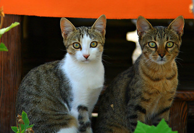 Cat brothers of Selimeye