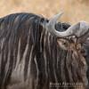 Stripes on a Wildebeest