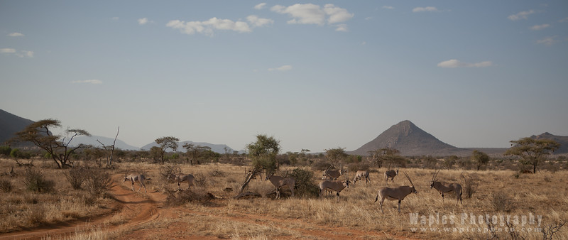 Oryx and Hills