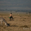 Cycling Past Zebras