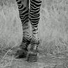 Striped Leggings, Striated Hooves