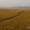 Maasai Mara Track