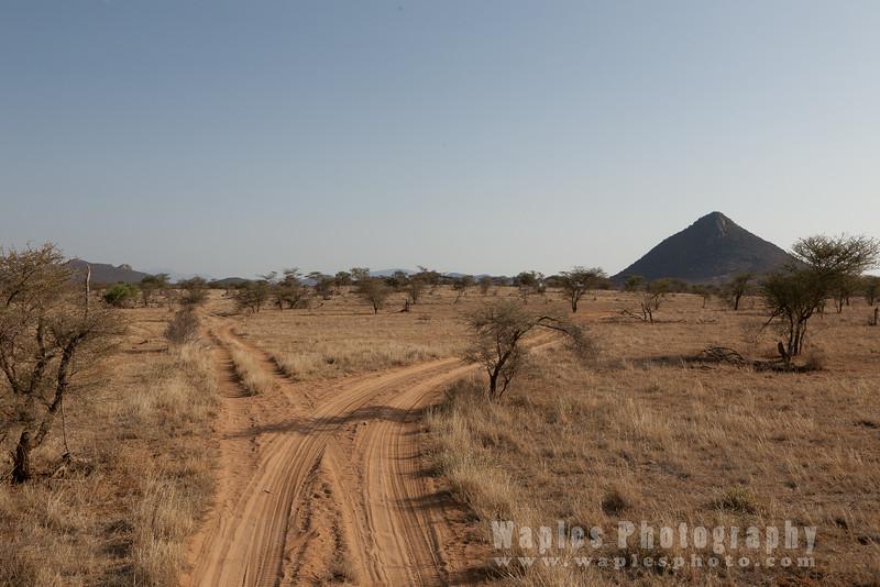 Diverging paths at Samburu