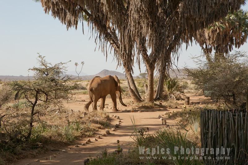 Aptly named Elephant Bedroom Camp