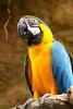 IMG_1501Madison Zoo 071110