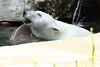 IMG_1516Madison Zoo 071110