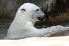IMG_1522Madison Zoo 071110