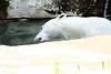 IMG_1518Madison Zoo 071110