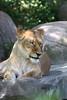 IMG_1478Madison Zoo 071110