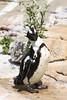 IMG_1490Madison Zoo 071110