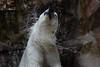 IMG_1512Madison Zoo 071110