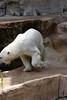 IMG_1513Madison Zoo 071110
