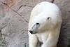 IMG_1503Madison Zoo 071110