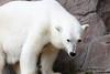 IMG_1502Madison Zoo 071110