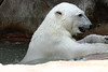 IMG_1523Madison Zoo 071110