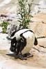 IMG_1491Madison Zoo 071110