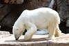 IMG_1507Madison Zoo 071110