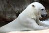 IMG_1525Madison Zoo 071110