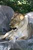 IMG_1477Madison Zoo 071110