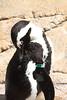 IMG_1492Madison Zoo 071110