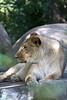 IMG_1476Madison Zoo 071110