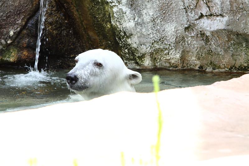 IMG_1509Madison Zoo 071110