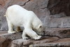 IMG_1505Madison Zoo 071110