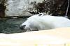 IMG_1517Madison Zoo 071110