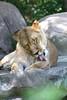 IMG_1480Madison Zoo 071110