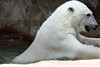 IMG_1524Madison Zoo 071110